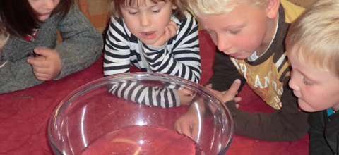 Littel kids observe experiment